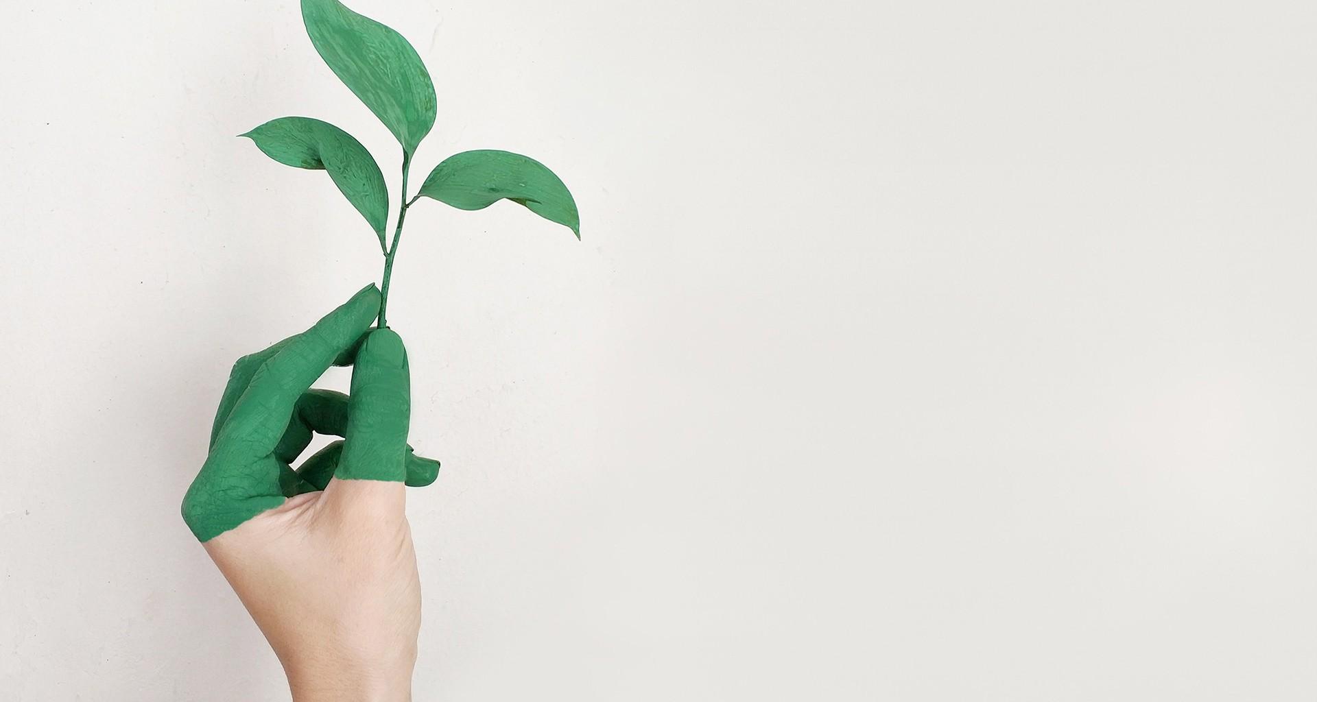 Mano con planta verde