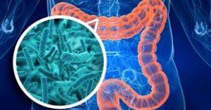 los probióticos en el cuerpo humano